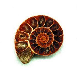 Ammonit Naturheilpraxis Steven Hänisch Logo- Heilpraktiker