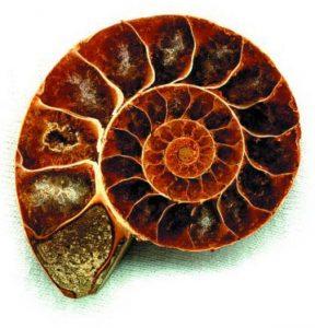 Ammonit Naturheilpraxis Steven Hänisch Logo - Heilpraktiker